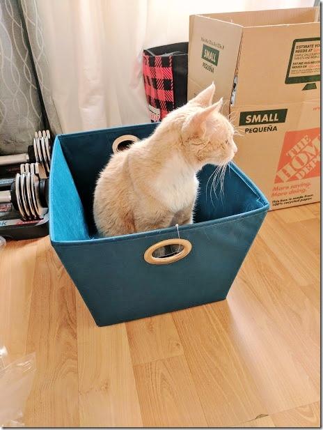 vegas in a box (460x613)