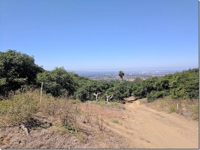 california avocados (785x589)