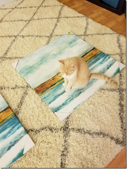 cat designer (478x637)
