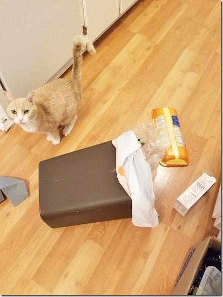 no regrets cat (441x588)