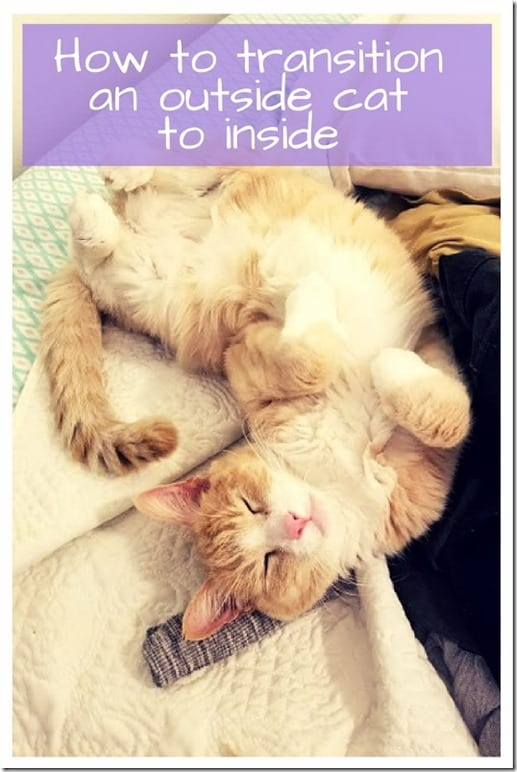 How To Transition An Outside Cat Stay Inside 534x800