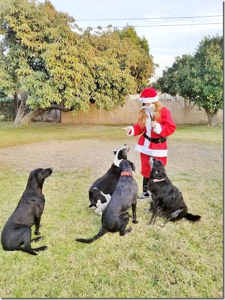 santa running blog (441x588)