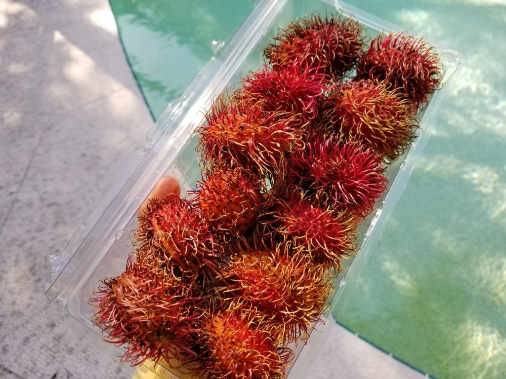 how to eat rambutan fruit
