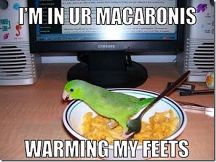 feets in macaroni