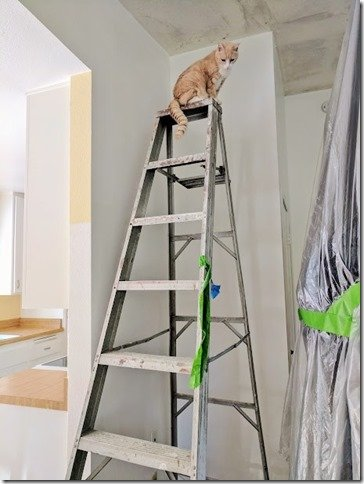 vegas climbed a ladder