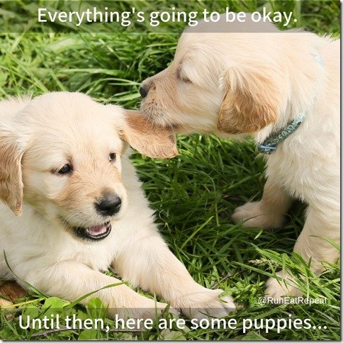 Everything is going to be okay. Until then here are some puppies. (800x800) (800x800)