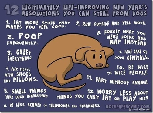dog resolutions