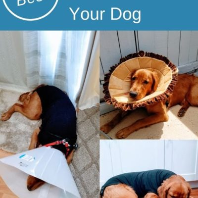 The Best Cone of Shame Alternatives for Dogs