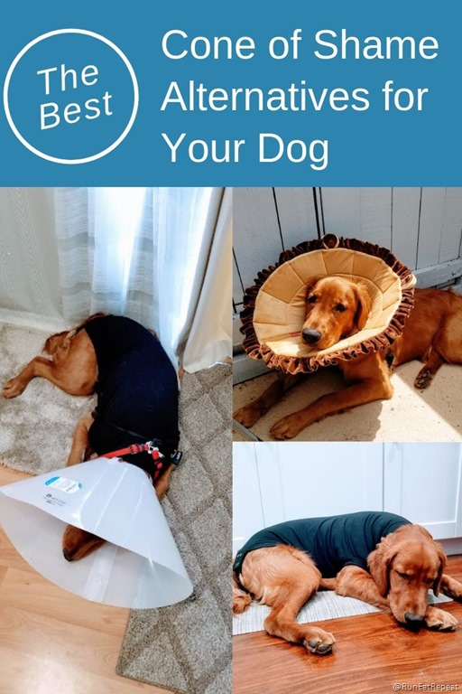 Cone Of Shame Alternatives For Dogs