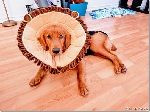 diego the dog (640x480)
