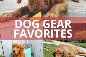 My Dog Must Haves for walking or running with your pup
