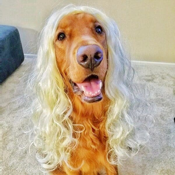 Running Podcast 131 dog wig