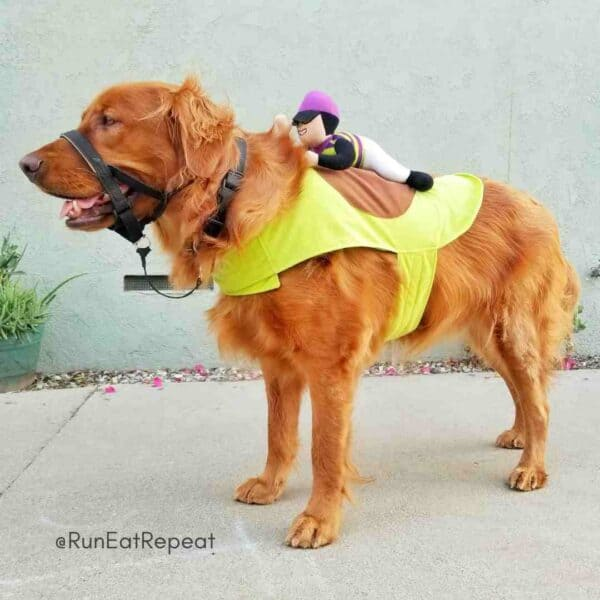 Best Golden Retriever costumes @RunEatRepeat (1)